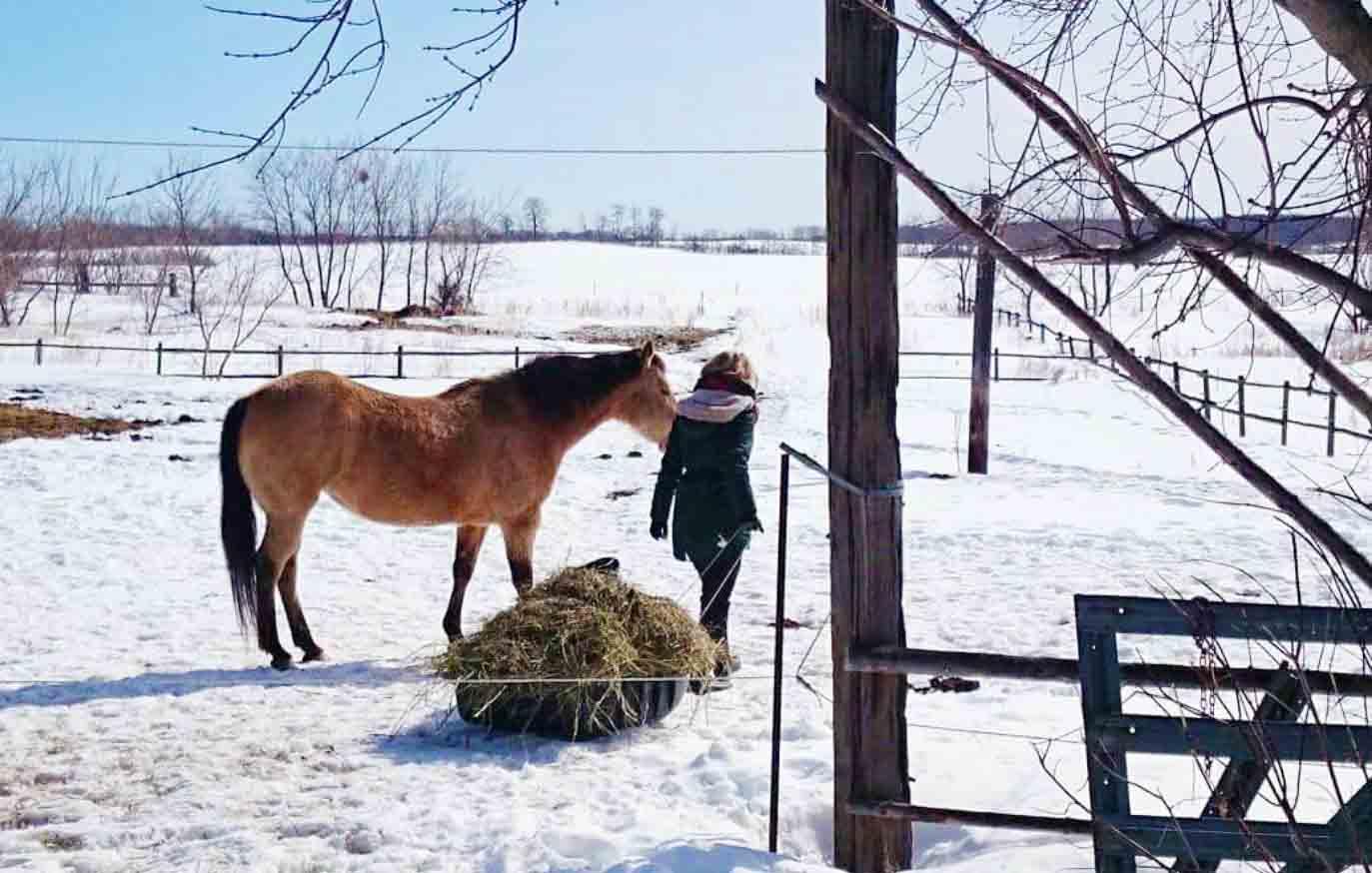 Pferdefarm Kanada